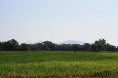 Larvicide testing in rice fields - SPAIN