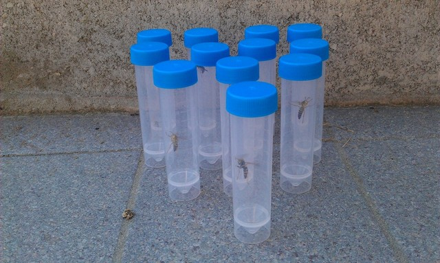 WASP COLLECTION FOR LABORATORI TEST