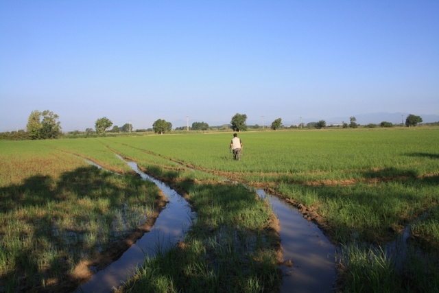 EFFICACY EVALUATION OF LARVICIDES IN RICE FIELD SPAIN