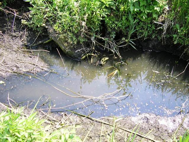 MOSQUITO BREEDING SITES MAPPING